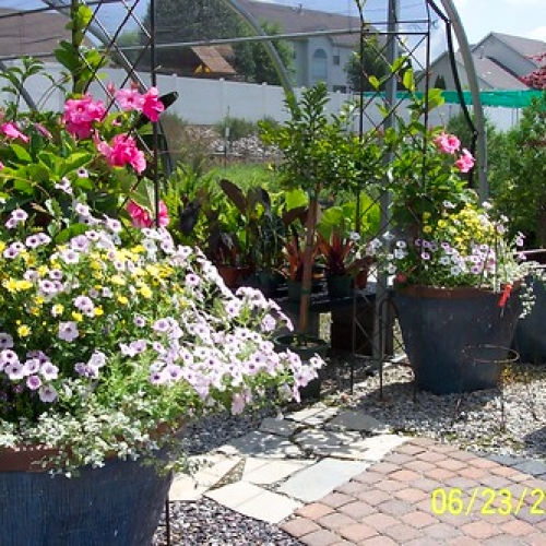 "Baxter Nursery • <a style=""font-size:0.8em;"" href=""http://www.flickr.com/photos/63612657@N05/5793073463/"" target=""_blank"">View on Flickr</a>"