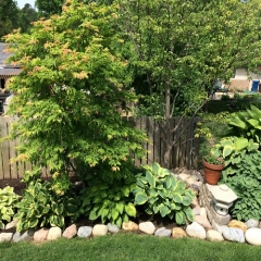 """Shade Garden • <a style=""""font-size:0.8em;"""" href=""""http://www.flickr.com/photos/63612657@N05/14226934039/"""" target=""""_blank"""">View on Flickr</a>"""