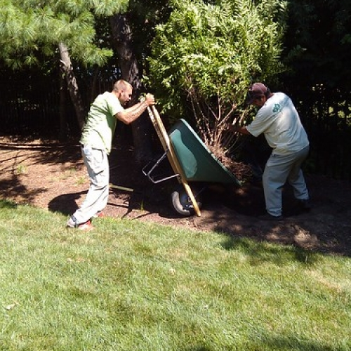 "Transplanting Shrubs • <a style=""font-size:0.8em;"" href=""http://www.flickr.com/photos/63612657@N05/7409444896/"" target=""_blank"">View on Flickr</a>"