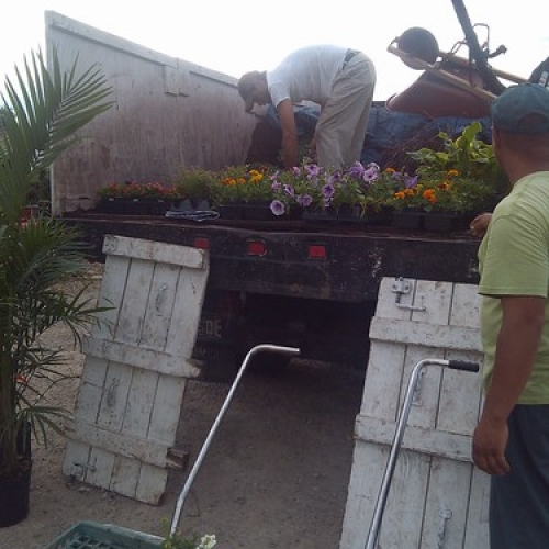 "Crews Loading Up Flowers For Spring Planting • <a style=""font-size:0.8em;"" href=""http://www.flickr.com/photos/63612657@N05/9272793576/"" target=""_blank"">View on Flickr</a>"