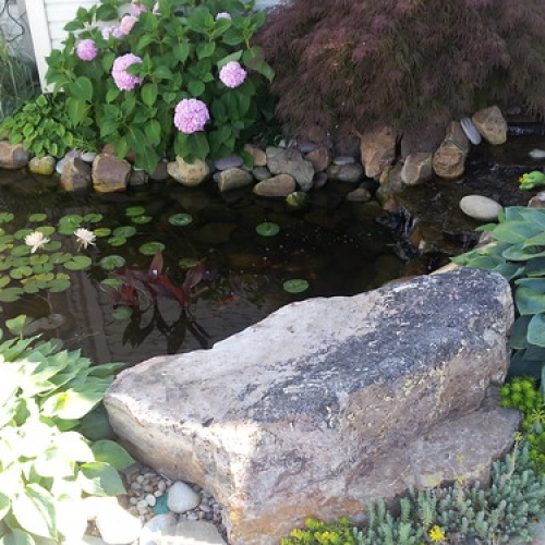 """Weeping Japanese Red Maple, Endless Summer Hydrangea, Water Feature • <a style=""""font-size:0.8em;"""" href=""""http://www.flickr.com/photos/63612657@N05/7161778233/"""" target=""""_blank"""">View on Flickr</a>"""