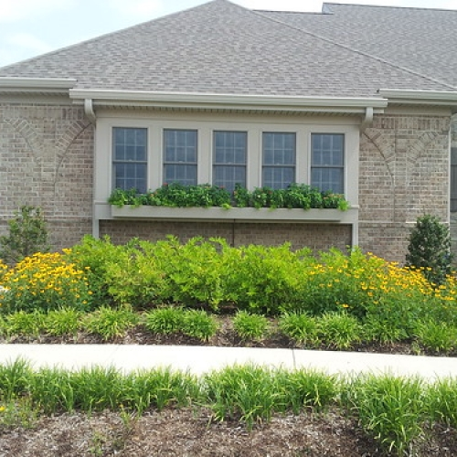 """Black Eyed Susan, Liriope, Summer Annuals in Window Box Planters • <a style=""""font-size:0.8em;"""" href=""""http://www.flickr.com/photos/63612657@N05/7538958542/"""" target=""""_blank"""">View on Flickr</a>"""