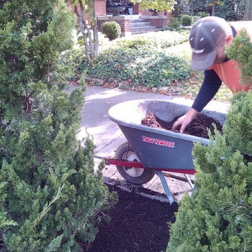 "Fall Mulch Service • <a style=""font-size:0.8em;"" href=""http://www.flickr.com/photos/63612657@N05/8142598545/"" target=""_blank"">View on Flickr</a>"