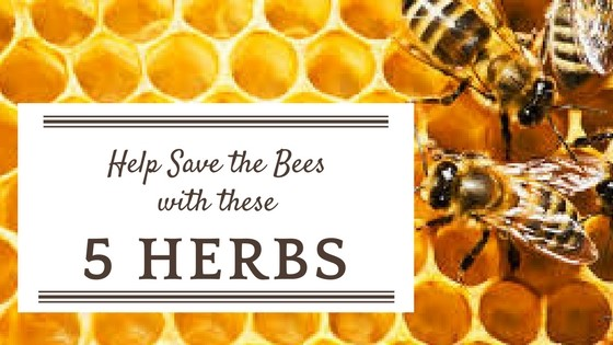 Help Save the Bees with these 5 Herbs
