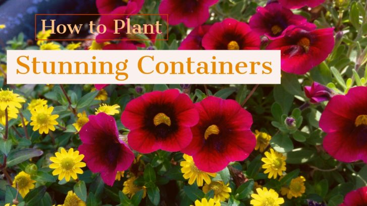 How to Plant Stunning Containers