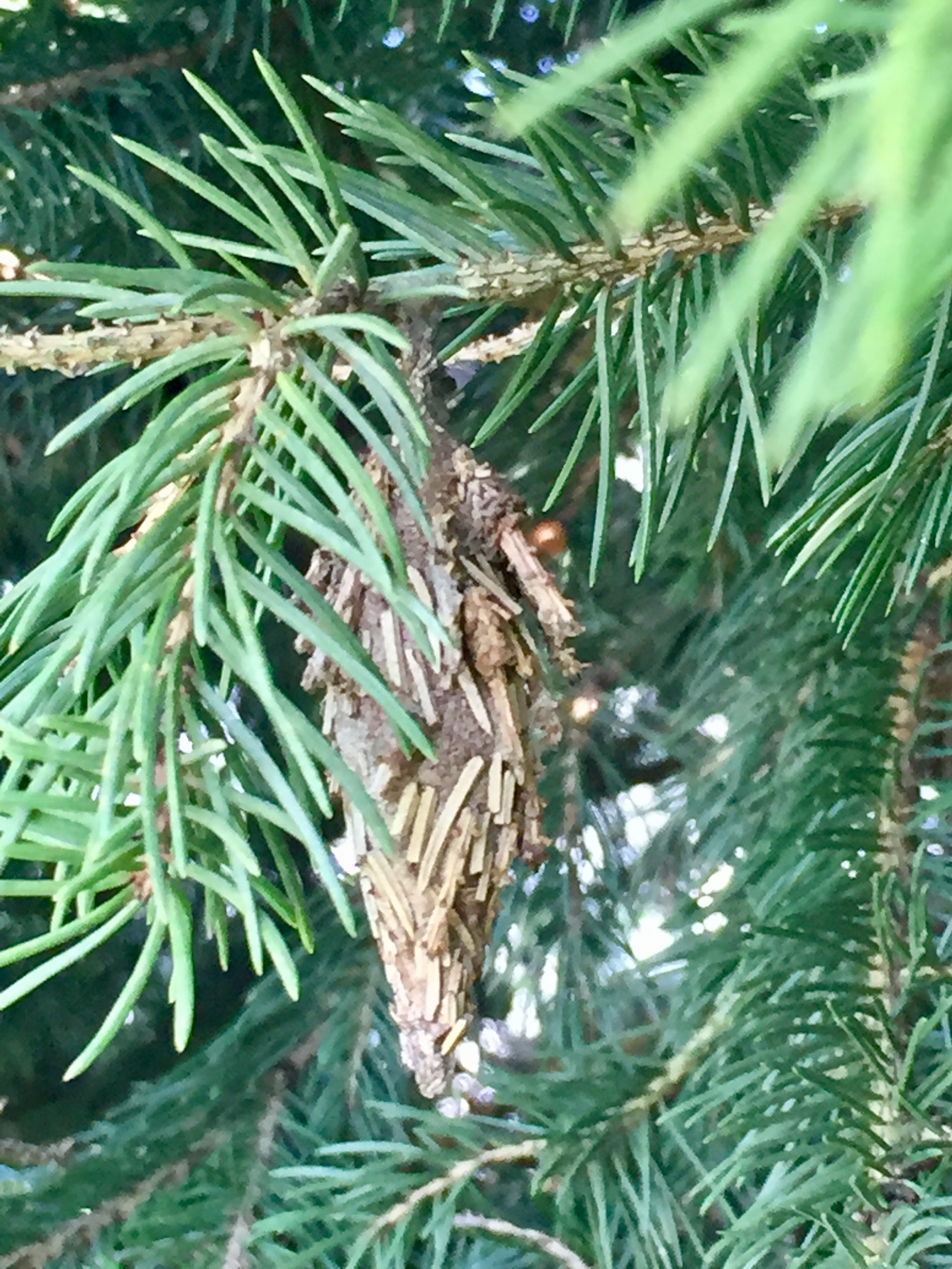 Bagworms and When to Kill Them | Baxter Gardens