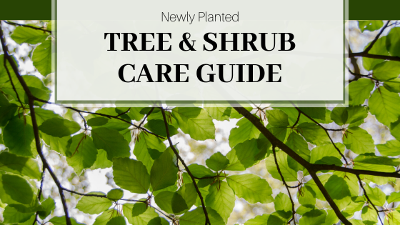 newly planted tree and shrub guide