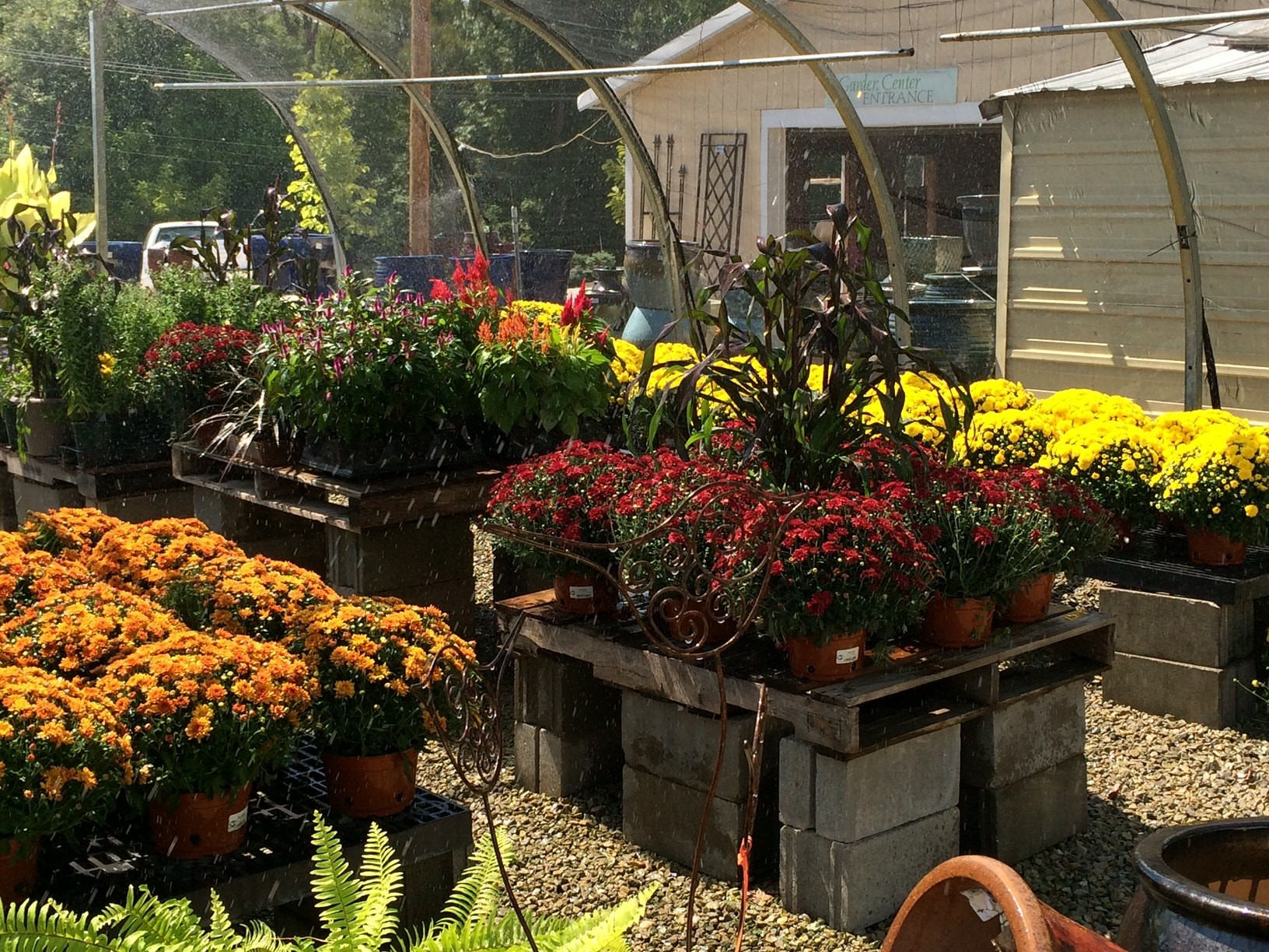 Planting fall containers when youre bored with mums baxter gardens colors of mums izmirmasajfo Gallery