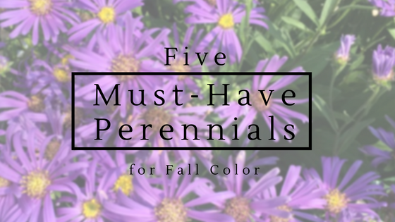 Adding color to your fall garden.