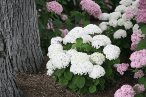Add white to your garden to make other plants stand out