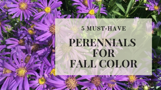 Perennials for fall.