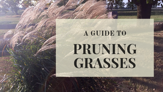 When should I prune grasses?