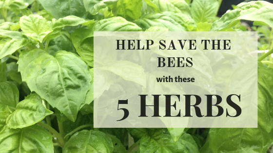 Best herbs for bees.