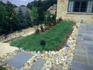 blue zinger carex planted in landscape bed surrounded by oversized iowa rainbow gravel and a pennsylvania bluestone patio and walkway