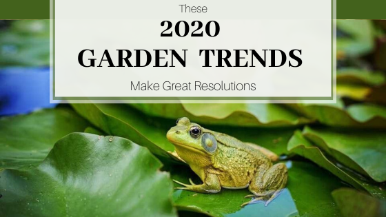 Frog on green lily pad with pink flower. These 2020 Garden Trends Make Great Resolutions.