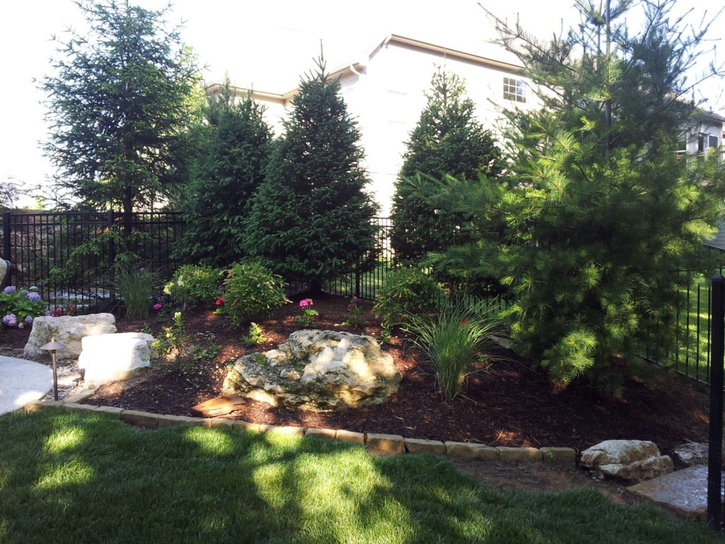 Large evergreen trees planted at the back of a landscape border with stone edging and large boulders.