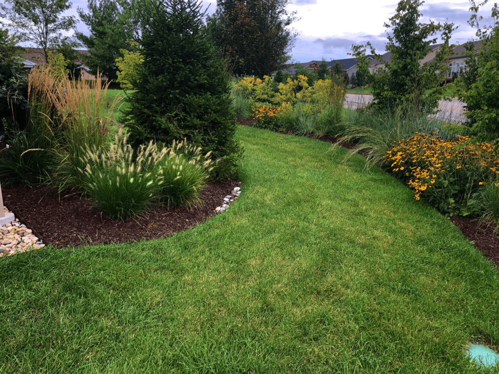 A grass pathway winds through landscape and screening with a mixture of grasses, yellow flowers, and large evergreens.