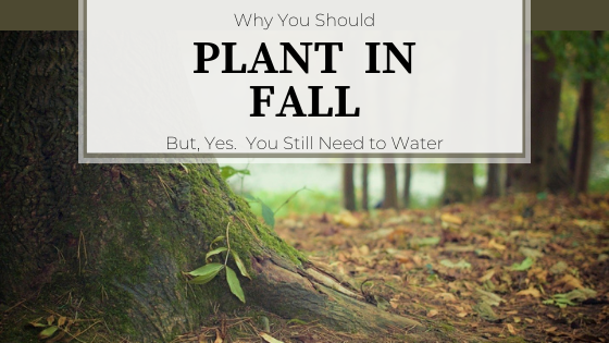Tree trunk in forest.  Why You Should Plant in Fall.  But, yes.  You still need to water.